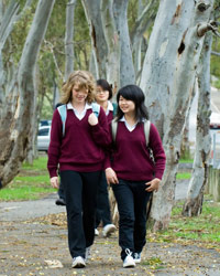 Students walking on a tree lined path